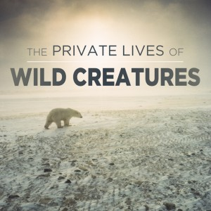 The Private Lives of Wild Creatures