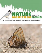 Newsletter | Nature Manitoba
